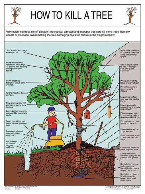 how to kill a tree.jpg